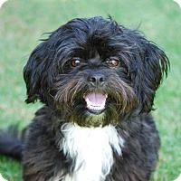 Adopt A Pet :: VERSACE - Los Angeles, CA