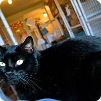 Adopt A Pet :: Roger - St. Charles, MO