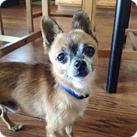 Adopt A Pet :: Octavius - AUSTIN, TX