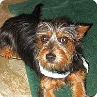 Adopt A Pet :: Rags - Brunswick, ME