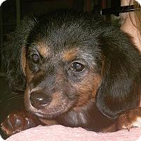 Adopt A Pet :: Mac - Huntsville, AL