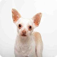 Adopt A Pet :: LUCY - Murray, UT