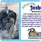 Adopt A Pet :: Joshua