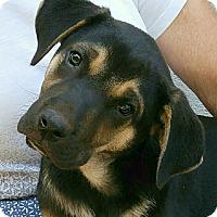 Adopt A Pet :: Teddy - Greenville, SC