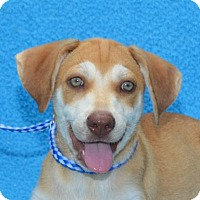 Adopt A Pet :: **MAESTRO** MEET AUG 6TH! - Mukwonago, WI