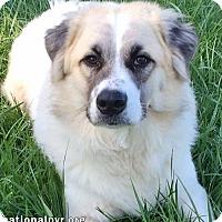 Adopt A Pet :: Dean in NY - Beacon, NY