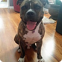 Adopt A Pet :: Miko - Troy, MI