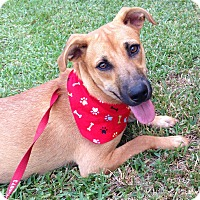 Adopt A Pet :: Samantha DOB 2/21/16! - Carthage, MS