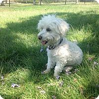 Adopt A Pet :: Albert einstein - San diego, CA