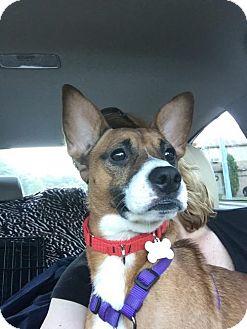 Feist Mix Dog for adoption in Willingboro, New Jersey - Micha