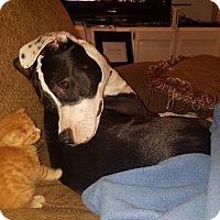 Adopt A Pet :: Shakira - Rincon, GA