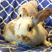 Adopt A Pet :: Linus - Idaho Falls, ID
