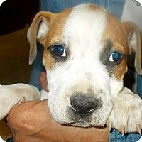 Adopt A Pet :: Zeke - Hockessin, DE