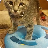 Adopt A Pet :: Squirt - Warrenton, MO