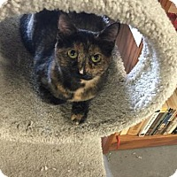 Adopt A Pet :: Claire-Come See Me At Cupboard Maker Bookstore - Harrisburg, PA