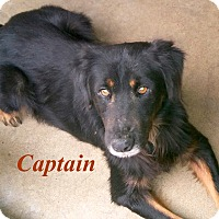 Adopt A Pet :: Captain - El Cajon, CA