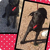 Adopt A Pet :: Avery - Scottsdale, AZ