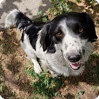 Adopt A Pet :: Mitzie  NAB (Sadie) - Salt Lake City, UT