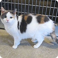 Adopt A Pet :: Madeline - Geneseo, IL