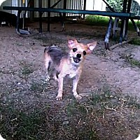 Adopt A Pet :: Yoda - Graceville, FL