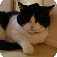 Adopt A Pet :: Daisey - Modesto, CA