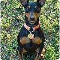 Adopt A Pet :: Baxter - Nashville, TN