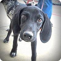 Adopt A Pet :: Cubby - Richmond, VA