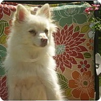 Adopt A Pet :: Zoey - Adamsville, TN