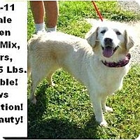 Adopt A Pet :: # 424-11 - ADOPTED! - Zanesville, OH