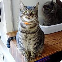 Adopt A Pet :: Frito - Belleville, MI