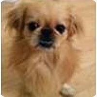 Adopt A Pet :: Murphy - Cleveland, OH