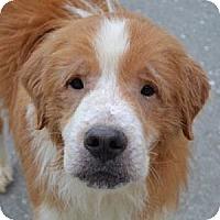 Adopt A Pet :: Memphis - Brattleboro, VT
