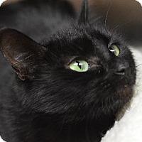 Adopt A Pet :: Tootie 14123 - Atlanta, GA