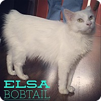 Adopt A Pet :: Elsa - Raleigh, NC