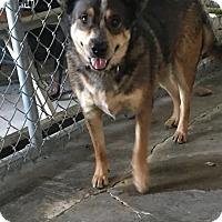 Adopt A Pet :: JUNIOR - Cadiz, OH