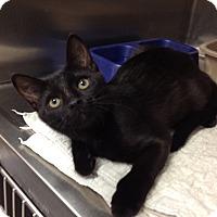 Adopt A Pet :: H-1 Pepper - Triadelphia, WV