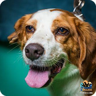 Beagle Mix Dog for adoption in Evansville, Indiana - Honey