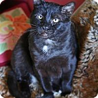 Adopt A Pet :: Mister - Oakland, CA