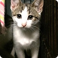 Adopt A Pet :: Glory - East Brunswick, NJ
