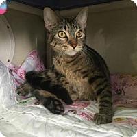 Adopt A Pet :: Amanda - Fort Collins, CO