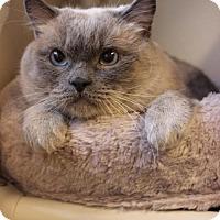 Adopt A Pet :: Finnegan - Boise, ID