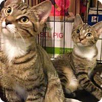 Adopt A Pet :: Brownie n Tabitha - Whitestone, NY