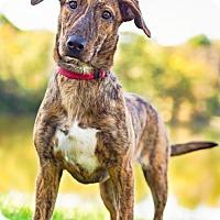 Adopt A Pet :: Tess D3154 - Shakopee, MN