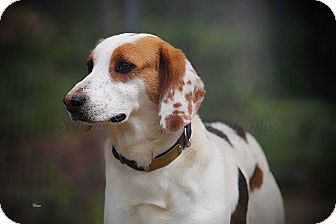 Hound (Unknown Type) Mix Dog for adoption in Richmond, Virginia - Iris