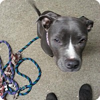 Adopt A Pet :: Jezebelle - Custer, WA