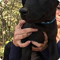 Adopt A Pet :: Rosita - Boston, MA