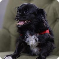 Adopt A Pet :: Nia - Morganville, NJ