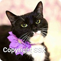 Adopt A Pet :: Penny Lane - Tega Cay, SC
