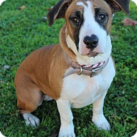 Adopt A Pet :: FIONA:Low fees/spayed - Red Bluff, CA