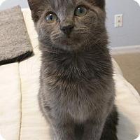 Adopt A Pet :: Miley - Orlando, FL